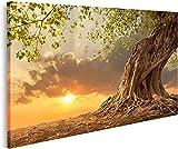 Bild auf Leinwand Wunderschöner Alter Baum bei