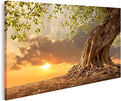 Bild auf Leinwand Wunderschöner Alter Baum bei Sonnenuntergang in...