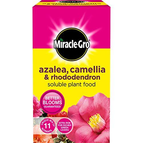 Scotts Miracle-Gro Engrais Soluble pour azalée, camélia et Rhododendron 1 kg A