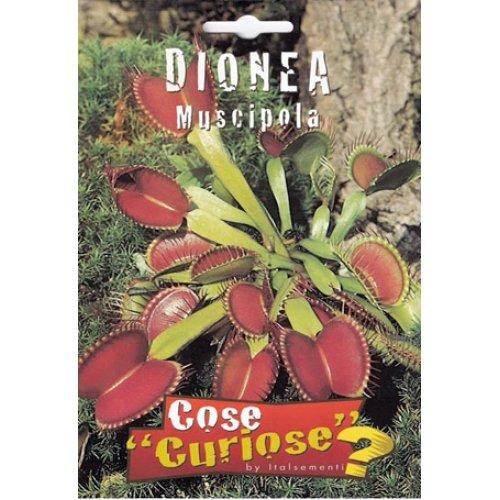 Semi - Dionaea muscipula (venere acchiappamosce)