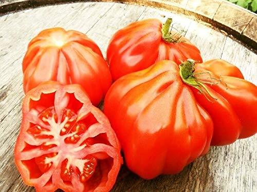 PLAT FIRM Germination Les graines: 100 seeds: Tomate Coeur de Boeuf, ochsenherztomate, Oxheart géant