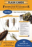 Flash Cards of Common Freshwater Invertebrates of North America Set One - Major Classes and Orders