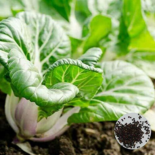 C-LARSS 100 Unids/Bolsa De Semillas De Baby Bok Choy, Plántulas De Cultivo Productivas De Rápido Crecimiento Nutritivo Pak Choi Para Jardín Semilla