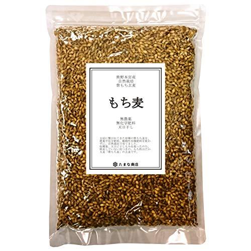 原種 紫もち麦 玄麦 450g 個包装 和歌山県産 無農薬 無化学肥料