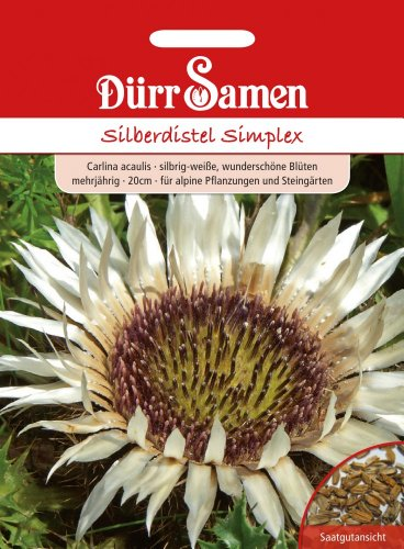 Silberdistel Simplex