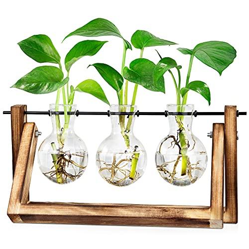 LESES Vaso vetro da tavolo, terrario per piante in legno stazioni di propagazione per piante idroponiche per la casa decor - 3 vasi di vetro