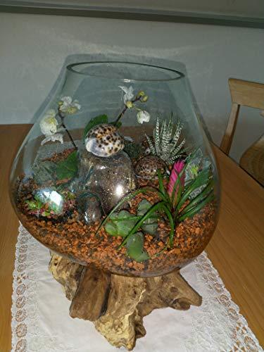 Wurzelholz Glas Vase M Ø Glas 10-13 cm, Deko Glas M, Teakholz Glas, Gamal M, Wurzel Holz Liqva M, Teakholz Glas Vase M, Kaffeebaum Vase M, Blumenvase M, Design vase M