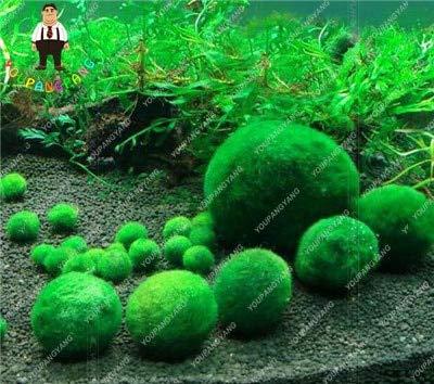 Elitely 100 stcke aquarium moos bonsai moos samen schne moos ball dekorative samen zier-samen topf diy hausgarten s
