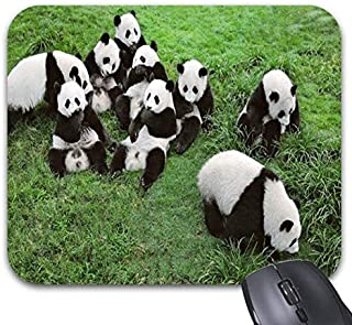 Pandas Family are Together in Grass Mouse Pads - Stylish Office Accessories (9.84 x 7.87in)