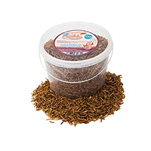 5 Litres Chubby Dried Mealworms for Wild Birds Only
