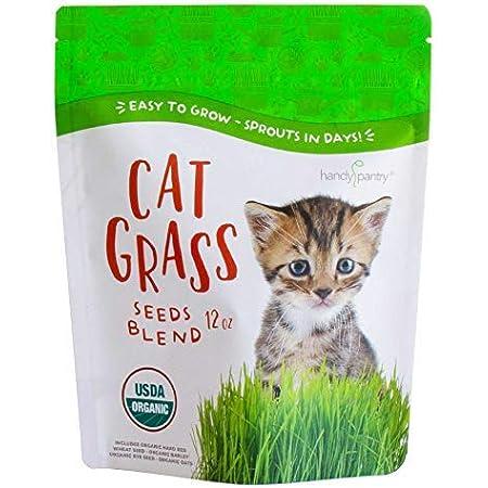Green Go Garden Green Digestive Crystal Catnip Grass Healthy Treat Plant Double Catnip Seed Grass Bonsai Cat Kitten