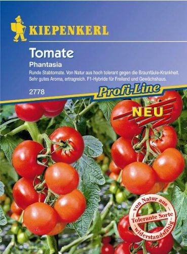 Tomaten Strauchtomate Phantasia F1 braunfäuletolerant