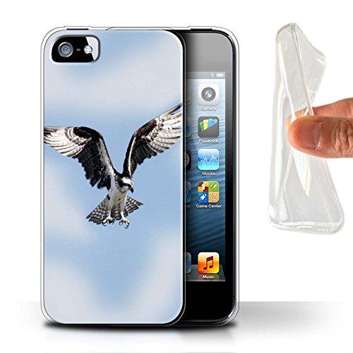 Custodia/Cover/Caso/Cassa Gel/TPU/Prottetiva STUFF4 stampata con il disegno Uccello Rapace per Apple iPhone 5/5S - Falco Pescatore