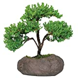 """Brussel's Bonsai Live Green Mound Juniper Outdoor Bonsai Tree in Rock Pot-5 Years Old 6"""" to 10"""" Tall"""