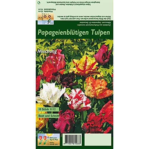 Florado 10x Papageien-Tulpen Blumenzwiebel, Tulpen Zwiebelblumen, Garten, Blumen Schnittblumen, Bienen Insekten Hummeln, Größe 11/12