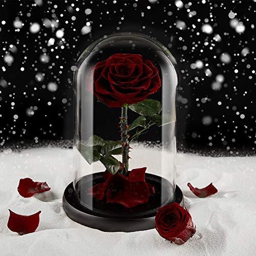 Eterfield Ewige Rose Handgemachte Immerwährende Echte Rosen Konservierte Blume im Glas Valentinstag Geburtstag Muttertag Thanksgiving Weihnacht Hochzeitstag Geschenke (Clarete)