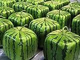 Square Watermelon Molds