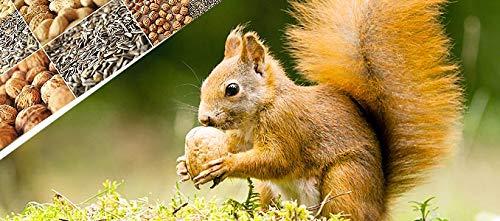 Eichhörnchenfutter extra