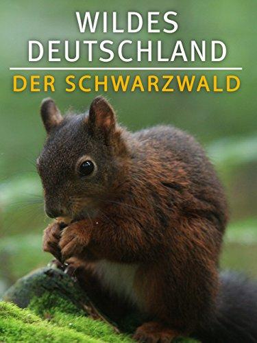 lidl reisen deutschland schwarzwald