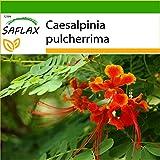 SAFLAX - Pequeño flamboyan - 10 semillas - Con...