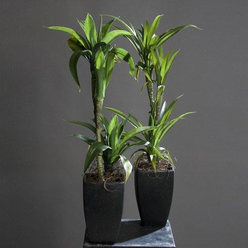 Yuccapalmen Yucca Palme Palmlilie Kunstpflanze, 2-fach sortiert, 85 cm