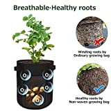 Zoom IMG-2 suptempo 3x sacchi per piante