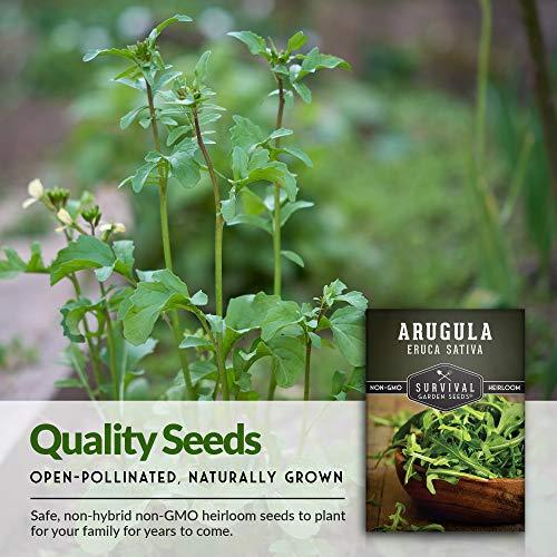 生存花园种子 - 芝麻菜种子栽培 - 数据包并指示工厂并增加你的家庭菜园 - 非转基因品种传家宝
