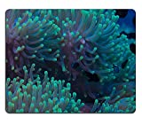 luxlady Gaming Mousepad imagen ID: 34145275Beautiful Anemone on a tropical Arrecife de Coral