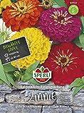 Zinnie Kalifornische Riesenmischung, gute Schnittblume mit großen Blüten