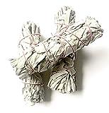 Chill French | Sauge Blanche de Californie | Salvia Apiana 30/35gr à brûler | Encens 100% Naturel, Aucun Traitement | Sauge Amérindienne pour Fumigation Purification - L.13 x l.3 cm (1 bâtonnet)
