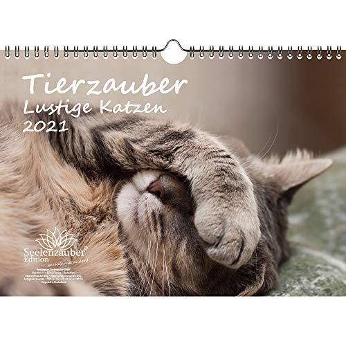 Tierzauber lustige Katzen DIN A4 Kalender für 2021 Lustige Momente mit Katzen - Seelenzauber