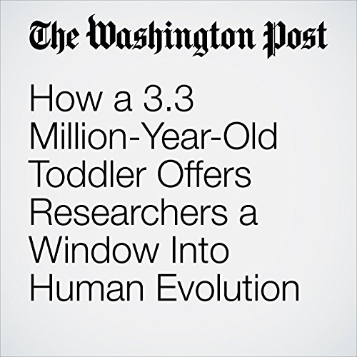 How a 3.3 Million-Year-Old Toddler Offers Researchers a Window Into Human Evolution copertina