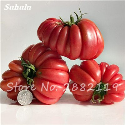 100 Pcs - grecques rares Ruffled mixtes Graines de tomate plantes Heirloom douce jardinage non Ogm légumes de semences pour jardin 2