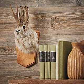 Kotulas Jackalope Wall Mount, Rabbit with Antlers