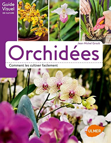 Orchidées - Comment les cultiver facilement