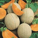 David's Garden Seeds Fruit Cantaloupe Hearts of Gold SL9837 (Orange) 50 Non-GMO, Heirloom Seeds
