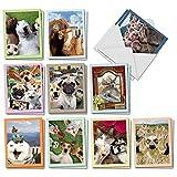 The Best Card Company - 20 Assorted Bulk Animal Cards Boxed (4 x 5.12 Inch) (10 Designs, 2 Each) - Animal Selfies AM2373OCB-B2x10