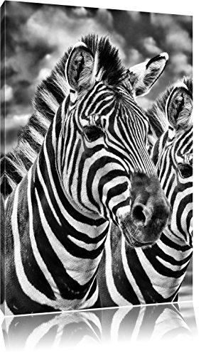 Monocrome, Zebra Pärchen , Format: 60x40 auf Leinwand, XXL riesige Bilder fertig gerahmt mit Keilrahmen, Kunstdruck auf Wandbild mit Rahmen, günstiger als Gemälde oder Ölbild, kein Poster oder Plakat