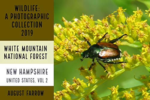 Wildlife: 2 Days in New Hampshire - 2019: A Photographic Collection: Vol 2 (2019: Wildlife in New Hampshire, USA) (English Edition)