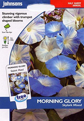 Johnsons Graines???Lot de g?n?rations???Fleur???Morning Glory Skylark mixte???30?Seeds