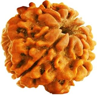 AJ Retail 100% Natural 1 Mukhi IGL Certified 20-25 MM Rudraksha Round Bead Form Nepal