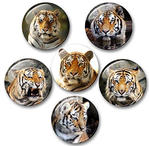 Merchandise for Fans Tiger Königstiger Sibirischer Tiger - 6 große Kühlschrankmagnete Ø 5 cm [ 01 ] für Memoboard Pinnwand Magnettafel Whiteboard