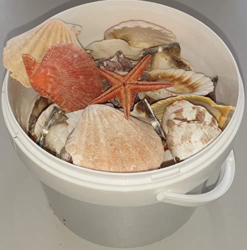 hibuy 450g, Muscheln gemischt, Muschelsortiment zum Dekorieren und Basteln, Muschel Sortiment, ca 40 Teile Muschelmix