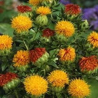 safflower orange