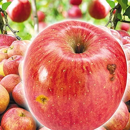 国華園 りんご 青森産 傷あり 美味しいサンふじ 木箱 約20� 1箱 食品