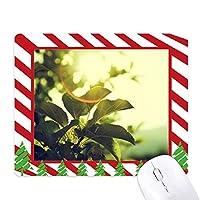 日光自然葉の植物の写真 ゴムクリスマスキャンディマウスパッド