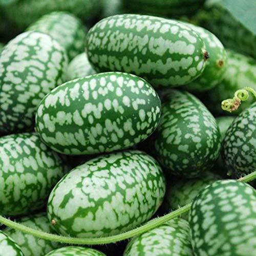 TOYHEART 10 Piezas De Semillas De Frutas De Primera Calidad, Mini Semillas De Sandía Fáciles De Plantar Frutas Deliciosas Cultivos De Mini Semillas De Sandía Para Jardín Mini semillas de sandía