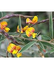 Cajanus cajan gandules paloma de guisantes de semilla exóticos habas comestibles rara gandul 50 semillas