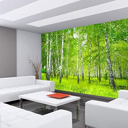 Fototapete Wand Foto Tapete Bild Vliestapete selbstklebende Textiltapete - SUNNY BIRCH FOREST - Birkenwald Bäume Wald Sonne Birkenhain Birke Birken Gras Natur Baum - no. 112, Größe:350x245cm Vlies HiQ