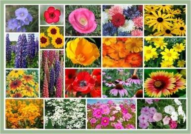 Full Sun Wildflowers